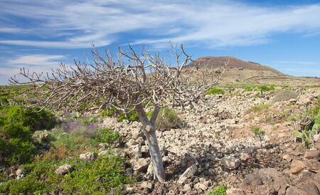 Inland Fuerteventura, natural monument Malpais de la Arena Stock Photo - 17149449