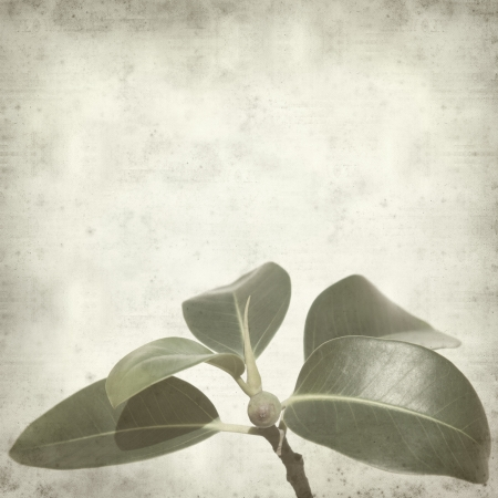 textured old paper background with small branch of fig tree photo