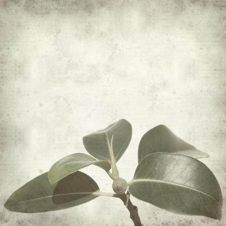 feigenbaum: texturierte alten Papier Hintergrund mit kleinen Zweig der Feigenbaum Lizenzfreie Bilder