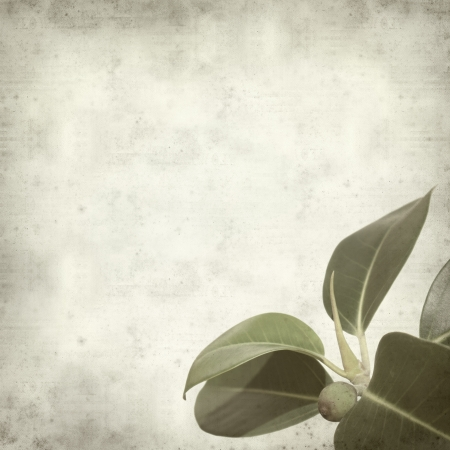 textured old paper background with small branch of fig tree Stock Photo - 17456607
