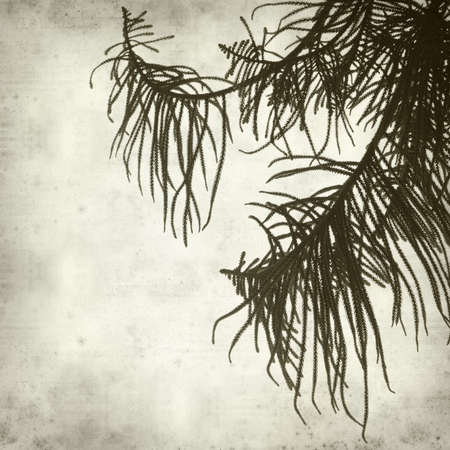 textured old paper background with araucaria tree branch photo