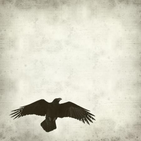 까마귀: 비행 까마귀와 오래 된 종이 배경 질감