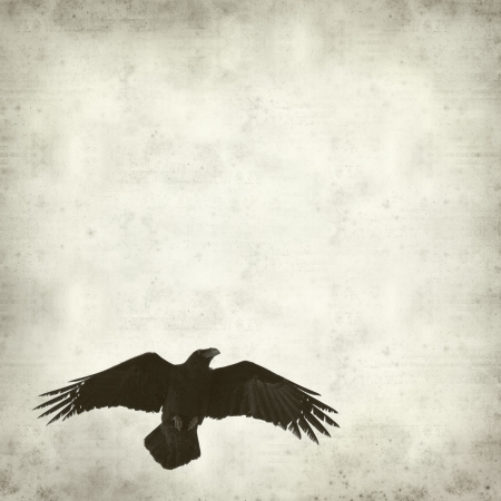 textured old paper background with flying raven