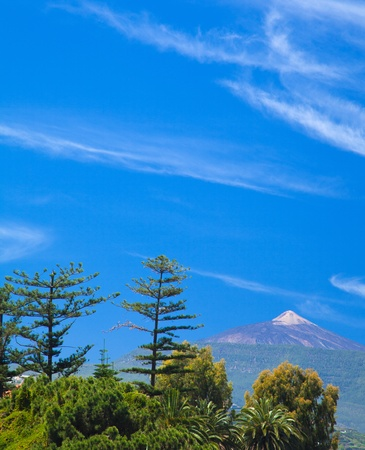 Northern  Tenerife, view over tree tops towards Teide, highest mountain in Spain photo