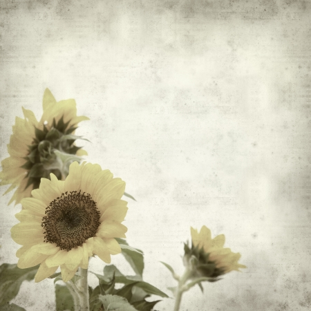 flowerhead: textured old paper background with yellow sunflower Stock Photo