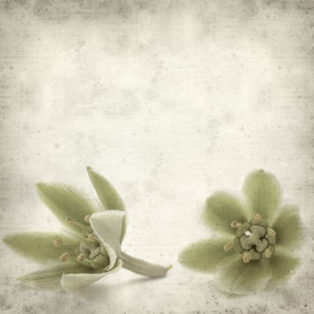 yucca: textured old paper background with yucca flowers Stock Photo