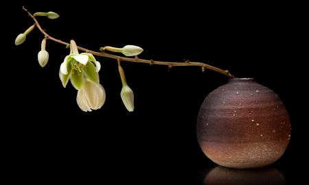 yucca flower iin smll ceramic vase photo