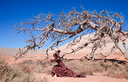 flamenco and a dead tree, art, life and death photo