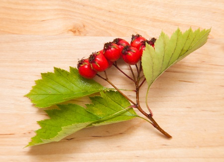 Hawthorn Crataegus; thornapple berries cluster Stock Photo - 21524464