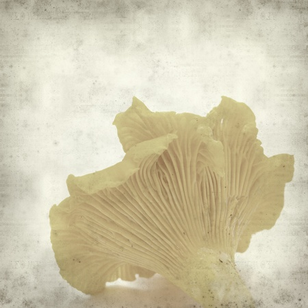 textured old paper background with red-capped mushroom Stock Photo - 21524692