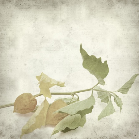 textured old paper background with physalis; photo