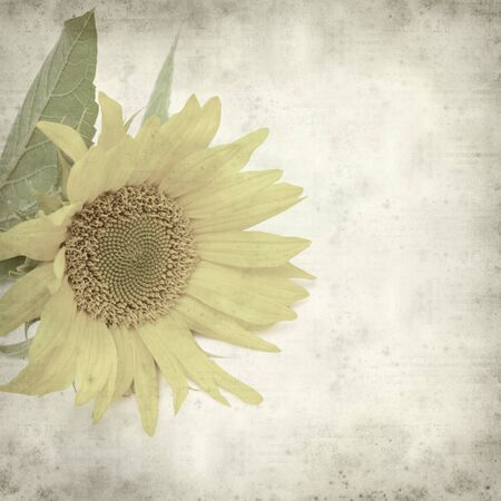 flowerhead: textured old paper background with sunflower
