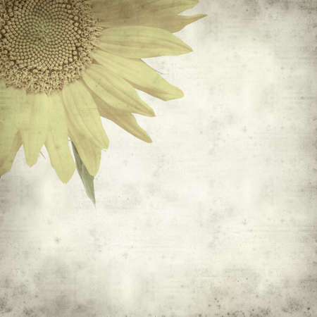 textured old paper background with sunflower photo