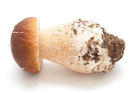 Boletus edulis aka porcino, isolated on white Stock Photo - 21525133