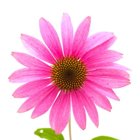 previously: Echinacea isolated, previously classified as Rudbeckia