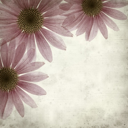 textured old paper background with  magenta Echinacea photo