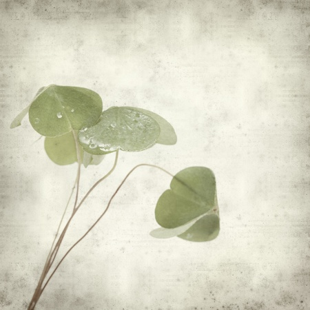 woodsorrel: textured old paper background with green oxalis leaves