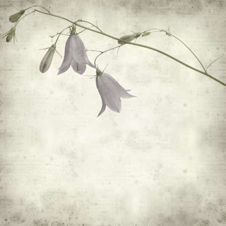 textured old paper background with campanula, bellflower Stock Photo - 21759316