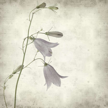 textured old paper background with campanula, bellflower photo