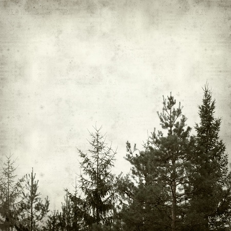 textured old paper background with conifer forest Stock Photo