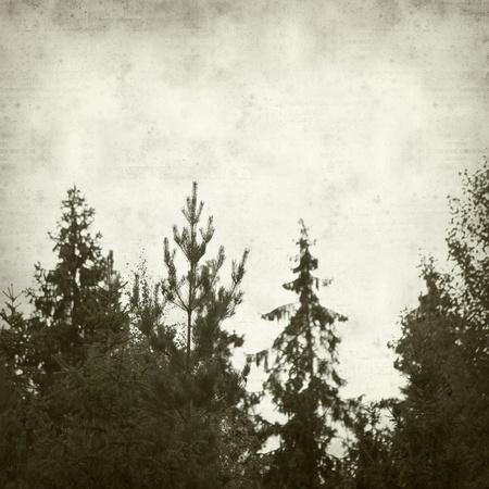 textured old paper background withnorthern forest