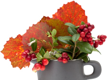 stilllife: autumnal stilllife with lingonberries and aspen leaves