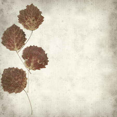 textured old paper background with  aspen leaves photo