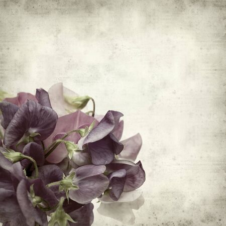 textured old paper background with sweet pea flowers photo