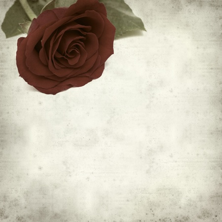 textured old paper background with red rose photo
