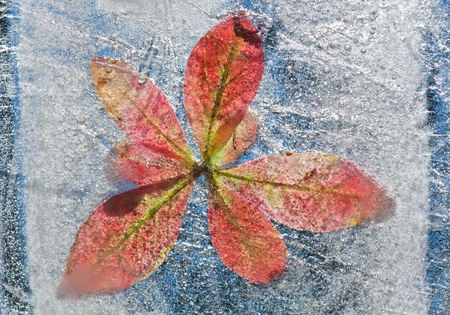 icy plants - flora frozen into ice, autumn changing into winter concept photo