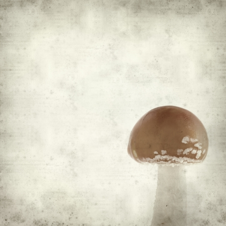 berserk: textured old paper background with  fly agaric