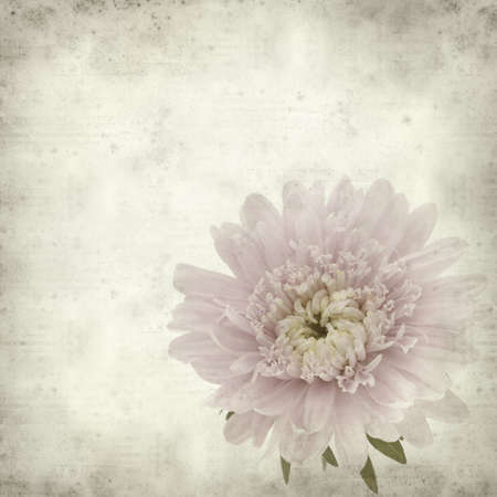 textured old paper background with pale pink aster  photo