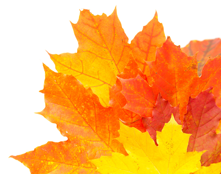 carotenoid: autumnal colorful leaves isolated Stock Photo