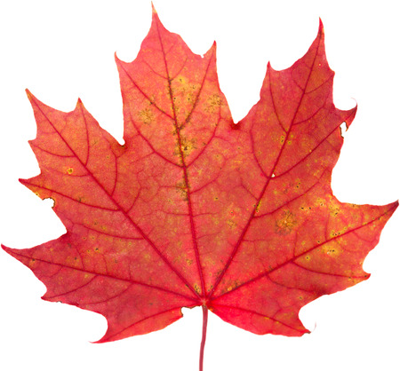 autumnal colorful leaves isolated Stock Photo