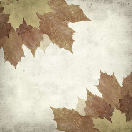 textured old paper background with autumnal maple leaves photo