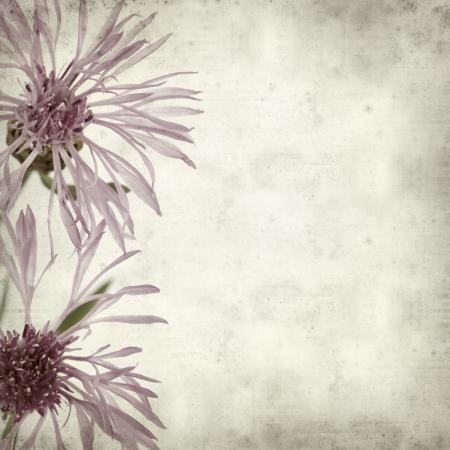centaurea: textured old paper background with purple centaurea flowers