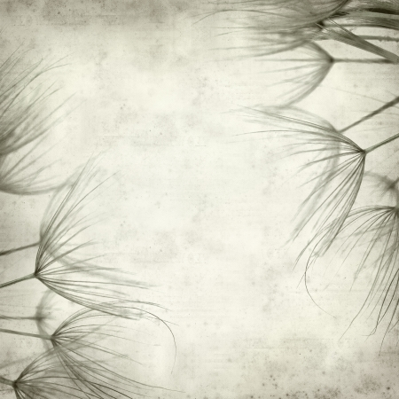 textured old paper background with salsify plant seedhead photo