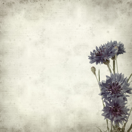 textured old paper background with cornflower photo