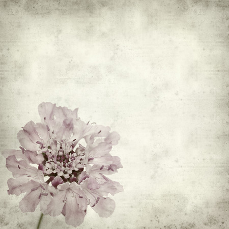 textured old paper background with scabiosa photo