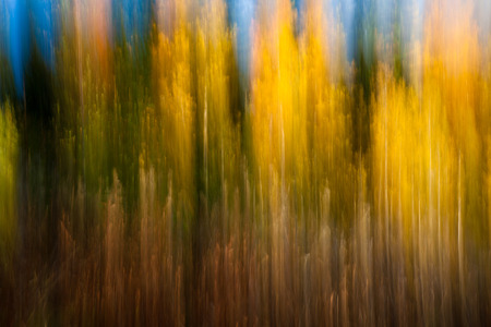 autumnal forest abstraction with camera motion photo