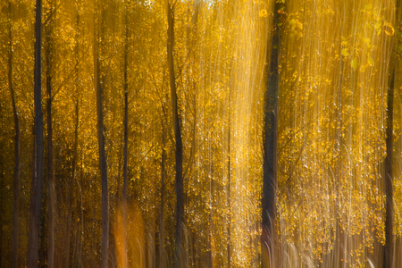palitra: autumnal forest abstraction with camera motion