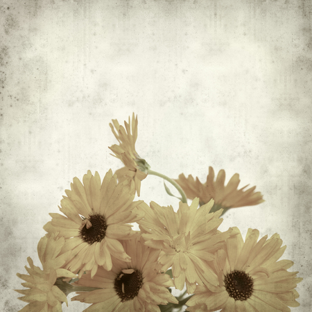 textured old paper background with calendula photo