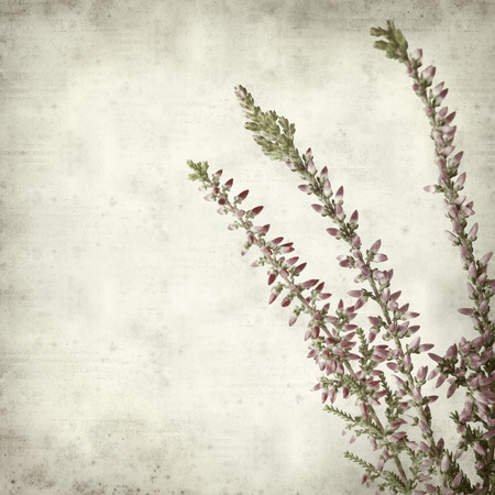 textured old paper background with heather photo