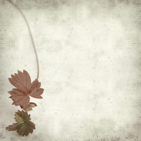 textured old paper background with cow parsley photo
