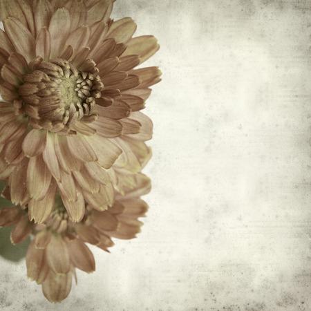 textured old paper background with chrysanthemum 版權商用圖片