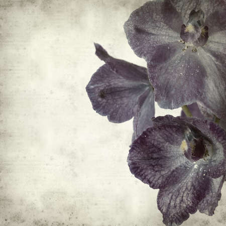 textured old paper background with delphinium photo