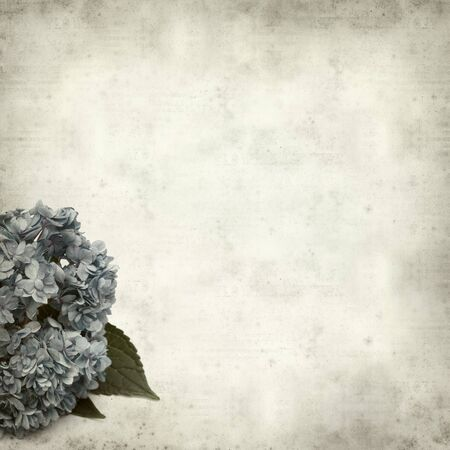 textured old paper background with blue hydrangea photo