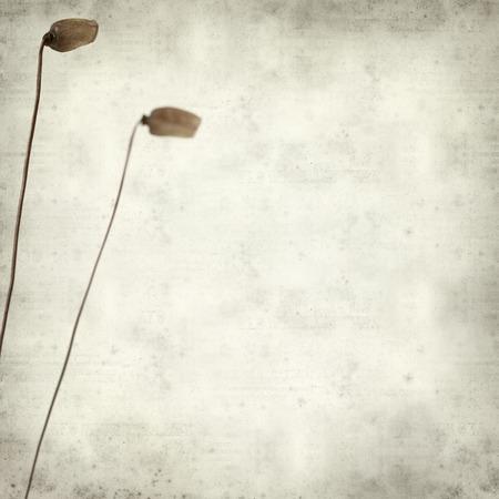 sporen: texturierte alten Papier Hintergrund mit mos Sporenkapseln Lizenzfreie Bilder