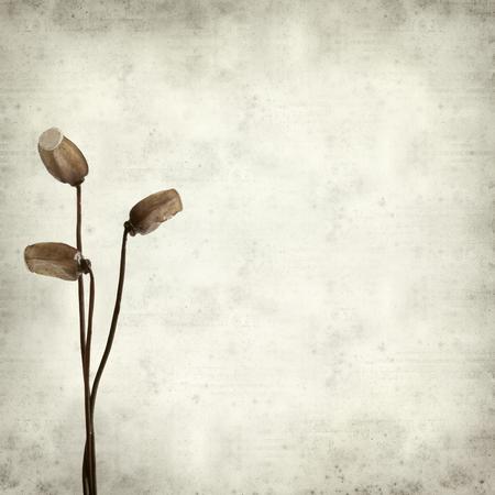sporen: texturierte alten Papierhintergrund mit mos Sporenkapseln