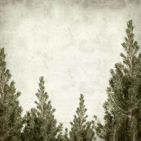 textured old paper background with small fir tree photo